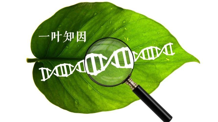 关于基因突变检测,其意义是什么?