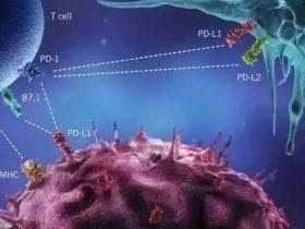 肿瘤免疫治疗的浪潮丨必须了解的PD-L1抗体