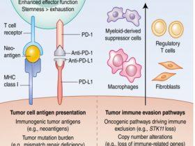 2019ASCO :PBRM1基因缺失与肿瘤应答的相关性