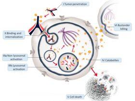EGFR靶向耐药后的应对思路及使用PD1的细节学习