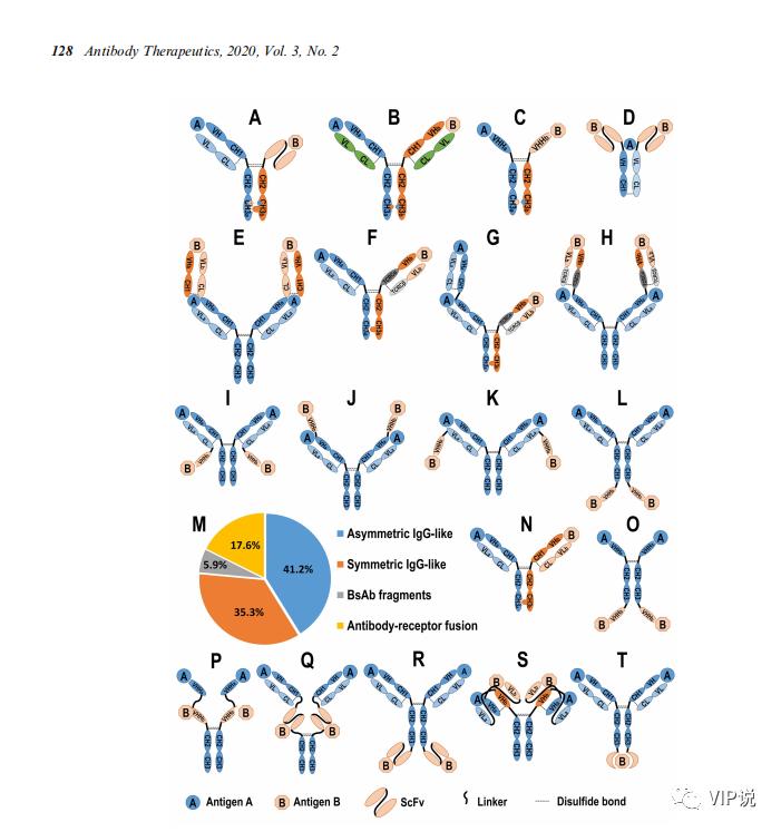 中国双特异性抗体的开发:概况与展望