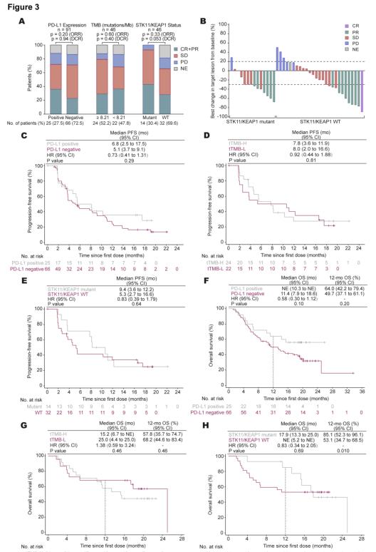 卡瑞利珠单抗联合阿帕替尼治疗非鳞NSCLC的疗效和生物学标志物分析