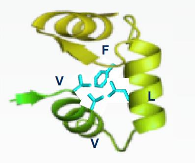 p53抑癌基因的抗癌机制取得了重要突破