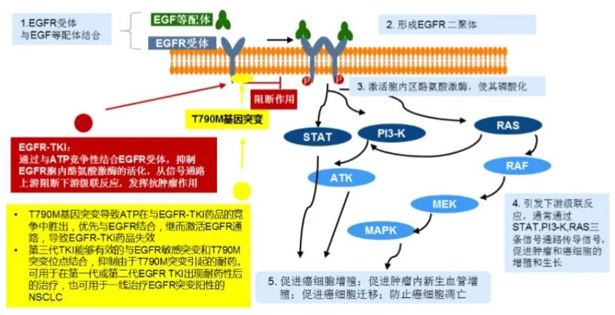 肺癌创新药伏美替尼获中国国家药监局附条件批准上市